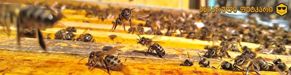 მხიარული ფუტკარი